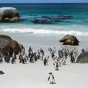 Cape Peninsula and penguine