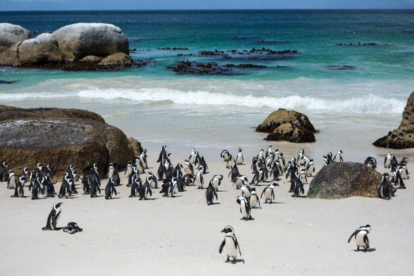 Cape Peninsula and penguine