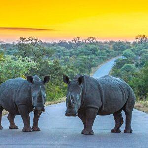 Kruger 3 day Safari